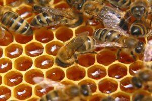 мед и пчелы на сотах