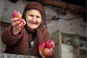 старушка протягивает яблоки