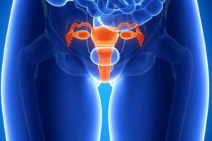 картинка половые органы женщины