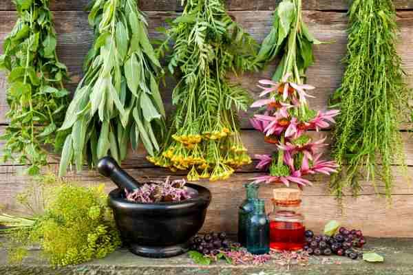 Травы при климаксе: сборы и растительные лекарства от приливов и потливости