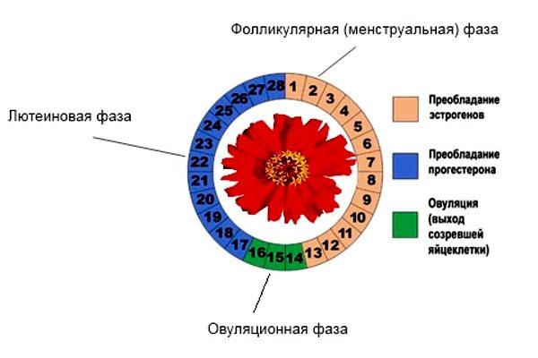 влияние секса на регуляцию цикла-нь2