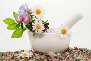 лекарственные растения в ступке