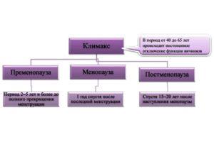 климактерические фазы