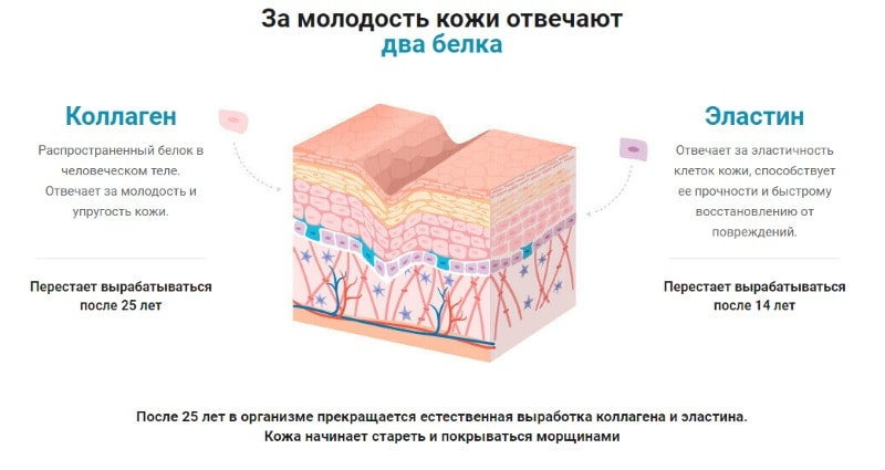 коллаген и эластин основной состав средства
